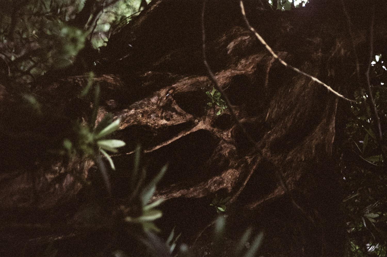 living-creatures-mai-01-7