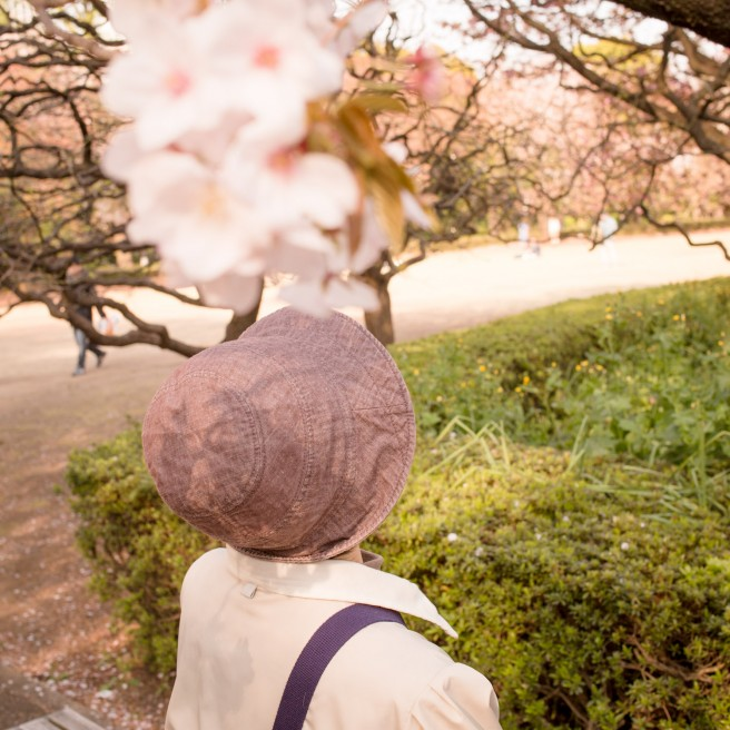 Sakura o mite, nihonjin o mite